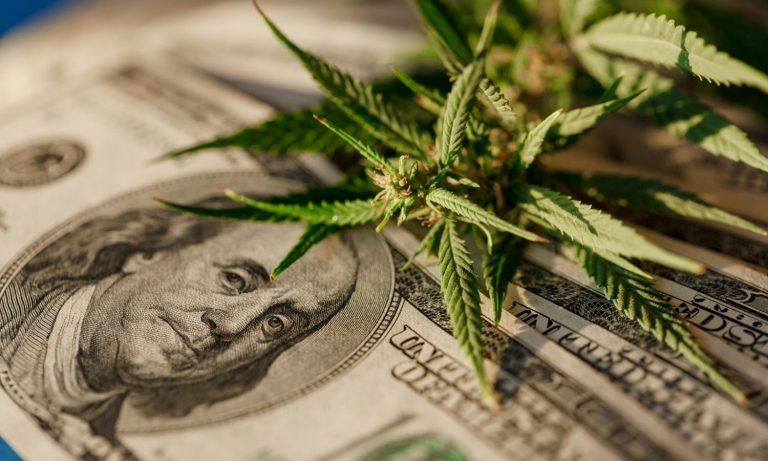 Will We Finally Have Free Trade For Marijuana After Legalization? – The Fresh Toast