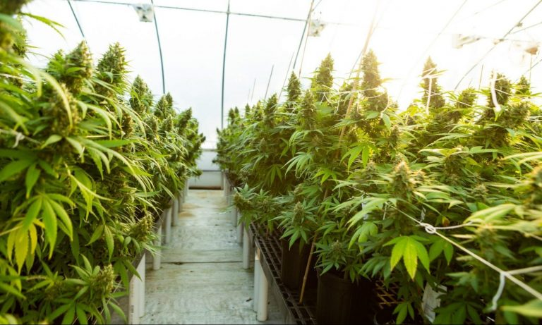 Will New York's Cannabis Law Create Sweeping Changes For Its Hemp Industry? – The Fresh Toast